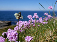 Beautiful pink flowers, growing on rocks and grass